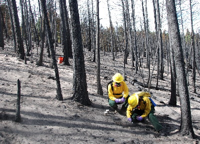USGS scientists collecting samples of ash and burned soil for later laboratory analysis after the September 2010 Fourmile Canyon Fire near Boulder, Colorado.