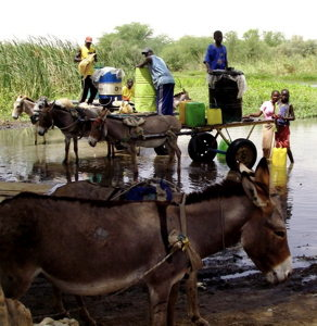 Villagers filling water containers from a river. They are standing on a cart pulled by donkeys.