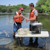 USGS scientists collecting water-quality samples from shallow groundwater under Ashumet Pond