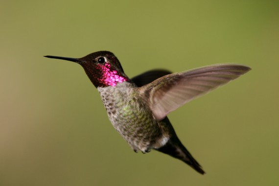 <A HREF='https://www2.usgs.gov/envirohealth/headlines/2018-05-18-trace_elements_in_birds_method.html'>New Method Can Measure Naturally Occurring Element Exposure in Hummingbirds Without Harm</A>
